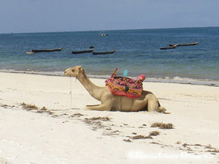Strand Kamel liegt im Sand