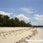 Menschenleerer Strand mit Palmen bei Kikambala